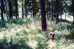 Old Leavenworth Cemetery