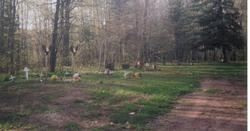 Belanger Settlement Cemetery