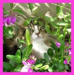 Kittylover