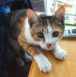 Kat in VA