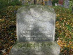 Harlow Colegrove