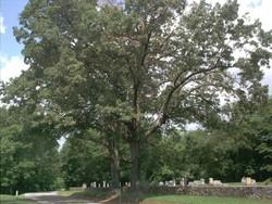 Wood Cemetery #1