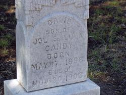 Dalie Gandy