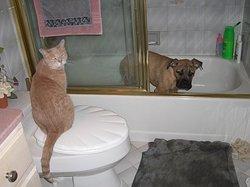 Tigger Roo Pet Cat 2000 2006 Find A Grave Memorial