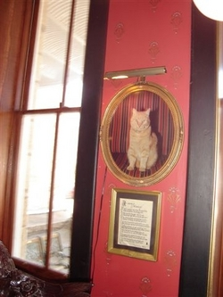Morris- Resident Cat of The Crescent Hotel