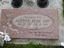 Ashton Rose Dry
