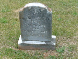 Laura J Herring