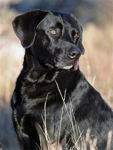 Jake dog-K9