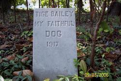 Tige Bailey