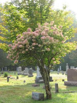 Westbrookville Cemetery