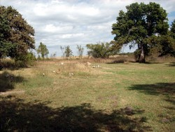 Old Bald Hill Cemetery