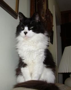 Sinbad Cat