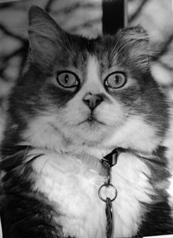 Ruggles The Cat