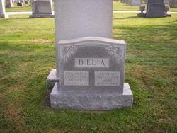 Evelyn D'Elia