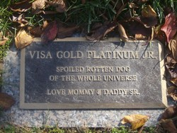 Visa Gold Platinum Jr.