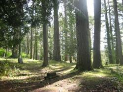 Olalla Cemetery