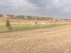 Donnybrook Community Cemetery
