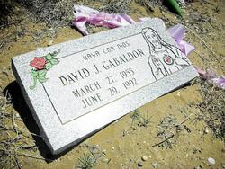 David J Gabaldon