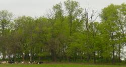 Gillespie Cemetery
