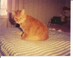 """Tommy """"My Beloved Cat"""" Foster"""