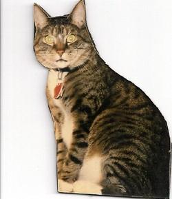 Morris Bubba Cat Berryhill