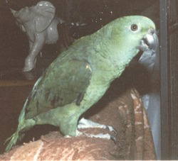 Pookie Bird