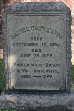 Daniel Cady Eaton