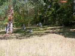Chilton Thomas Cemetery