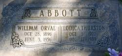Lodica <I>Thurston</I> Abbott