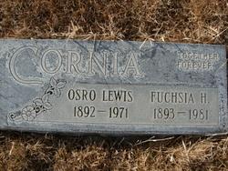 Fuchsia Fern <I>Holbrook</I> Cornia