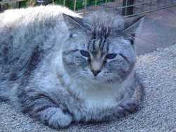 "Lovey ""Big Kitty"" Lasswell"