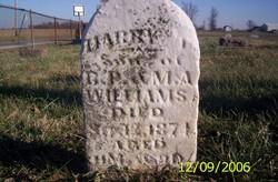 Harry P Williams