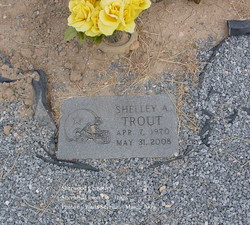 Shelley A Trout