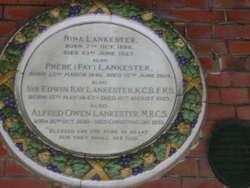 "Phebe ""Fay"" Lankester"