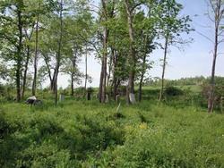Zeh Family Burying Ground