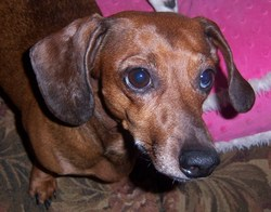 Cemsearchhound