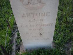 Antone Zebert