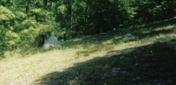 Wiseman Family Cemetery