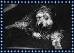 Luxi Dog