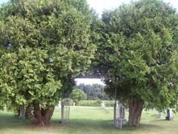 Debello Cemetery