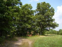 Old Shaw Farm Cemetery