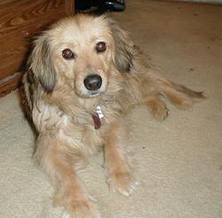 Lassie Cotten
