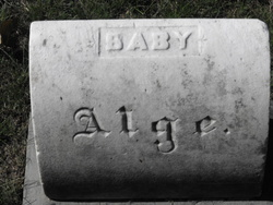 Baby Alge