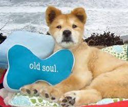 Baxter dog