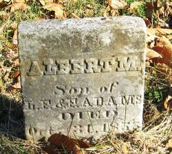 Albert M Adams