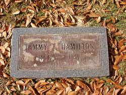 Tammy J Hamilton