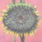 riofriotex