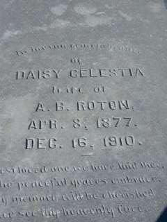 Daisy Celestia <I>Striping</I> Roton