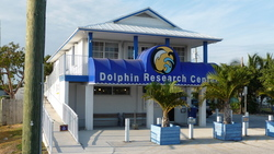 Dolphin Research Institute And Center