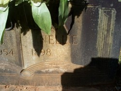 Nellie Vines